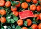 CNY oranges and red envelopes