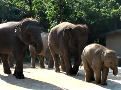 Safari on Wheels - Elephants