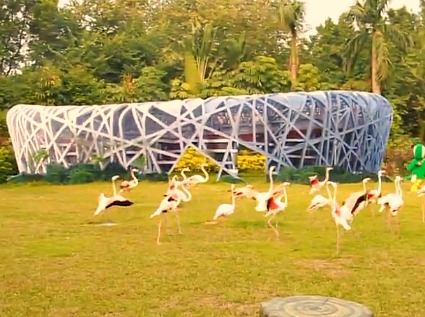 Chimelong Safari Park - Bird exhibits and shows