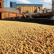 China Main Imports: Soybeans
