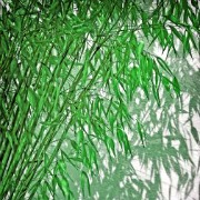 Plants in China - bamboo