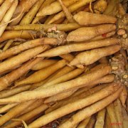 Plants in China - Ginseng Root