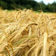 China Economy GDP - Agricultural products: barley