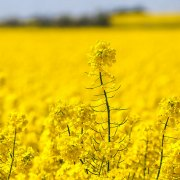 China Economy GDP - Agricultural products: oilseed