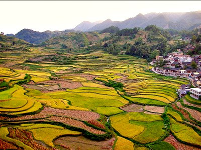 Economy of China: Agriculture, Rice Paddies in Guizhou