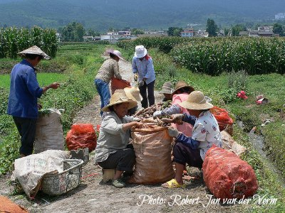 Economy of China: Agriculture and Farming