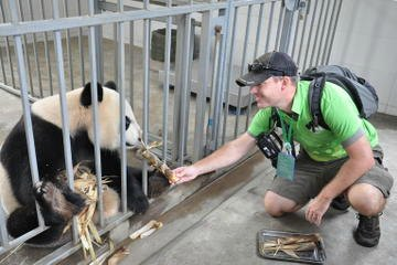 Volunteer at Panda Breeding Center
