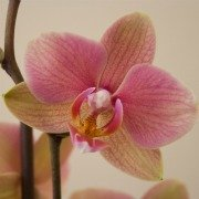 Plants in China - Orchid