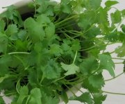 Chinese Food Ingredients: Chinese Parsley