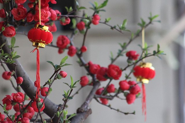 Flowers used to decorate for Chinese New Year: Plum Blossoms