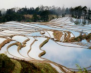 Yunnan Province Attractions: Rice Terraces